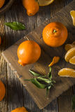 Raw Organic Minnela Tangerines Royalty Free Stock Photos