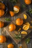Raw Organic Minnela Tangerines Stock Images