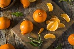 Raw Organic Minnela Tangerines Royalty Free Stock Photography