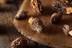 Free Raw Organic Morel Mushrooms Royalty Free Stock Photos - 55617728