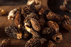 Raw Organic Morel Mushrooms. Ready to Cook Stock Photography