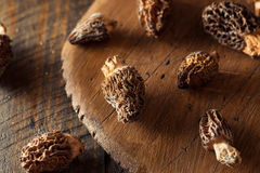 Raw Organic Morel Mushrooms. Ready to Cook Royalty Free Stock Photography