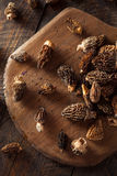 Raw Organic Morel Mushrooms. Ready to Cook Royalty Free Stock Photos