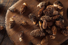 Raw Organic Morel Mushrooms. Ready to Cook Royalty Free Stock Photo