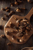 Raw Organic Morel Mushrooms. Ready to Cook Royalty Free Stock Image