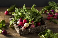 Raw Organic Muli Colored Easter Radishes. In a Bunch Royalty Free Stock Images