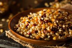 Raw Organic Multi Colored Calico Popcorn Stock Photography