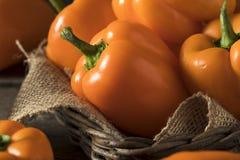 Raw Organic Orange Bell Pepper Stock Photo