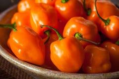 Raw Organic Orange Habanero Peppers Stock Photos