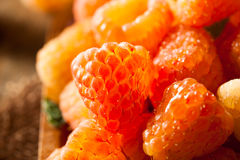 Raw Organic Orange Sunshine Raspberries Royalty Free Stock Images