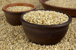 Raw organic pearl barley into a bowls on the background Stock Image