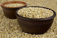 Raw organic pearl barley into a bowls on the background Stock Images