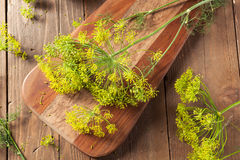 Raw Organic Pickling Dill Royalty Free Stock Images
