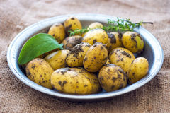 Raw Organic  Potatoes Royalty Free Stock Images