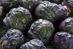 Raw Organic Purple Brussels Sprouts Royalty Free Stock Photo