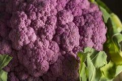 Raw Organic Purple Cauliflower Stock Photography