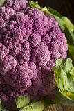 Raw Organic Purple Cauliflower Stock Image