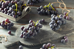 Raw Organic Purple Concord Grapes. Ready for Cooking royalty free stock photo