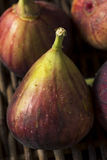 Raw Organic Purple Figs. Ready to Eat Royalty Free Stock Photos