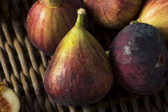 Raw Organic Purple Figs. Ready to Eat Stock Photos