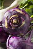 Raw Organic Purple Kohlrabi. Ready to Eat Stock Photos