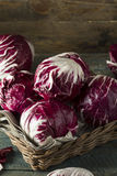 Raw Organic Purple Radicchio Lettuce. Ready to Eat Stock Photo