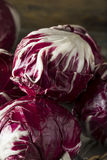 Raw Organic Purple Radicchio Lettuce. Ready to Eat Royalty Free Stock Images