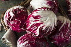 Raw Organic Purple Radicchio Lettuce. Ready to Eat Royalty Free Stock Photos