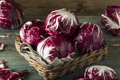 Raw Organic Purple Radicchio Lettuce. Ready to Eat Royalty Free Stock Photography
