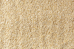 Raw Organic Quinoa Seeds Stock Photography