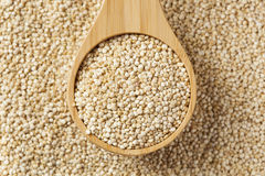 Raw Organic Quinoa Seeds Stock Photo