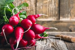 Raw organic radishes. On rustic wooden board, local vegetables Stock Images