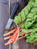 Raw Organic Rainbow Swiss Chard on a Background Stock Photo
