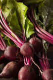 Raw Organic Red Beets Stock Image