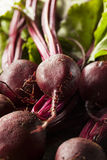 Raw Organic Red Beets Royalty Free Stock Image