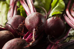 Raw Organic Red Beets Royalty Free Stock Photos