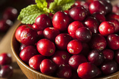 Raw Organic Red Cranberries Royalty Free Stock Images