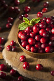 Raw Organic Red Cranberries Royalty Free Stock Photo