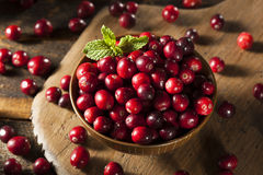 Raw Organic Red Cranberries Stock Photography