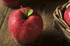 Free Raw Organic Red Delicious Apples Royalty Free Stock Images - 77748059