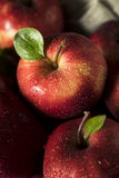 Raw Organic Red Delicious Apples. Ready to Eat Stock Photos