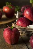 Raw Organic Red Delicious Apples. Ready to Eat Stock Images