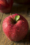 Raw Organic Red Delicious Apples. Ready to Eat Royalty Free Stock Photography