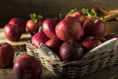 Raw Organic Red Delicious Apples Royalty Free Stock Photography