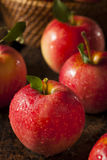 Raw Organic Red Gala Apples. Ready to Eat Stock Images