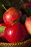 Raw Organic Red Gala Apples. Ready to Eat Stock Image