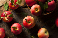 Raw Organic Red Gala Apples. Ready to Eat Royalty Free Stock Photo