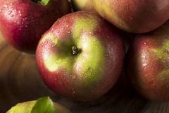 Raw Organic Red Mcintosh Apples. Ready for Eating Stock Photography