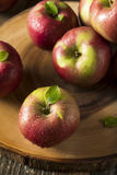 Raw Organic Red Mcintosh Apples. Ready for Eating Royalty Free Stock Image