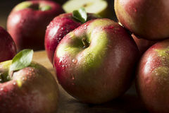 Raw Organic Red Mcintosh Apples. Ready for Eating Stock Images